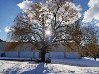 Sun Shines Through the Leafless Branches of Tree in Winter